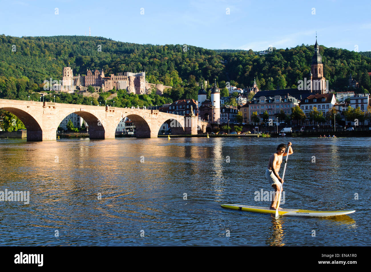 sup stand up paddle auf dem neckar heidelberg baden w rttemberg stock photo royalty free. Black Bedroom Furniture Sets. Home Design Ideas