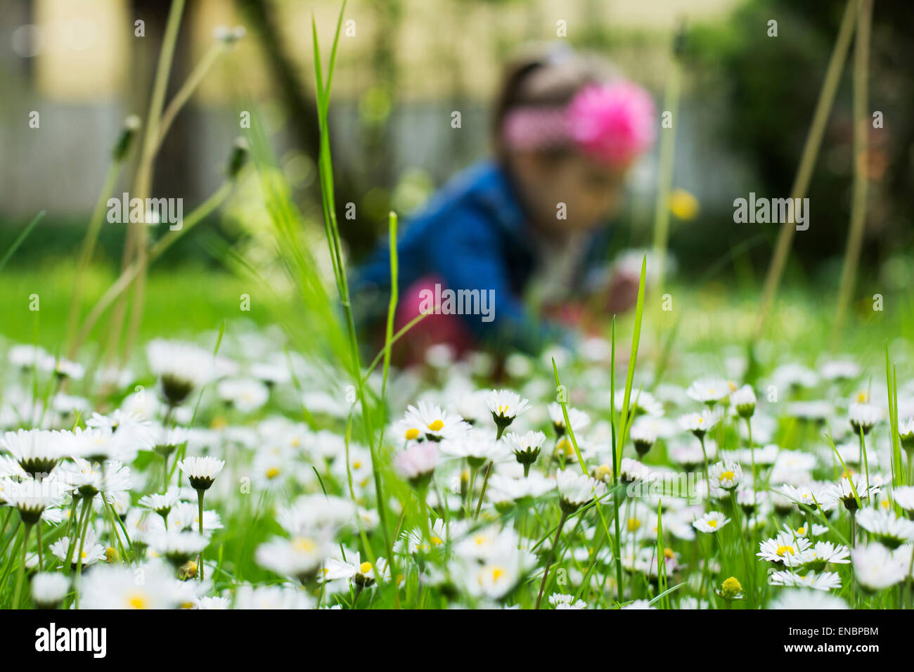 Lots of tiny white flowers blooming in the grass while little girl lots of tiny white flowers blooming in the grass while little girl is picking them dhlflorist Image collections