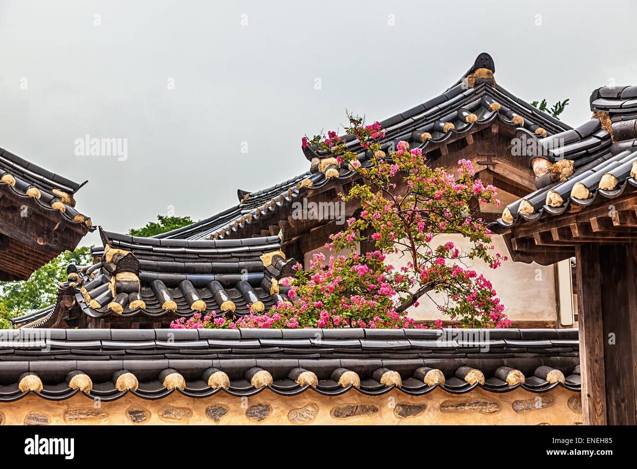 Traditional Old Korean Architecture Building With Tree And Pink Flowers At Rainy Day In South Korea