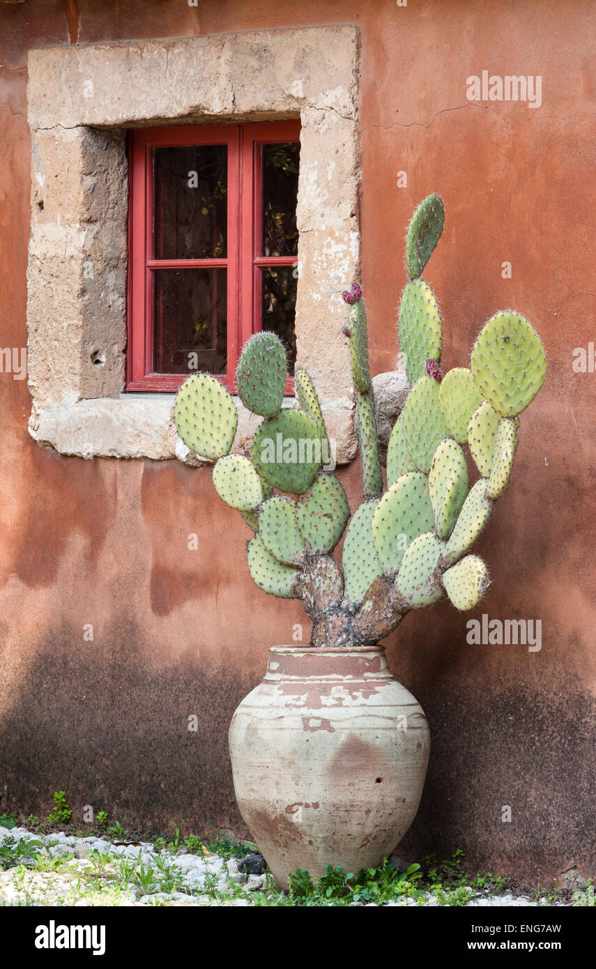 Sicily Italy A Prickly Pear Cactus In An Old Terracotta