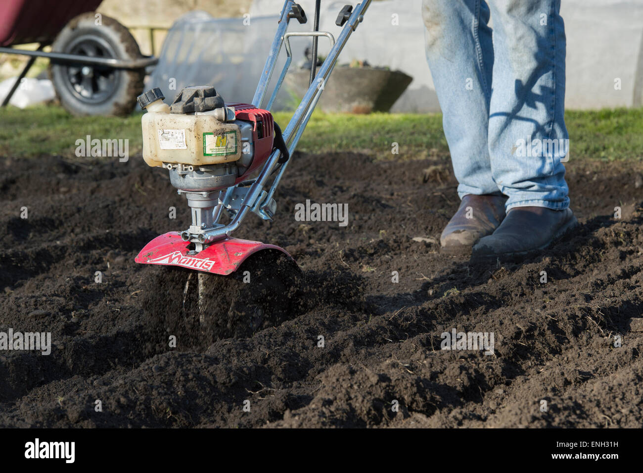 Gardener Rotavating A Vegetable Garden Preparing The Soil For Planting.  England