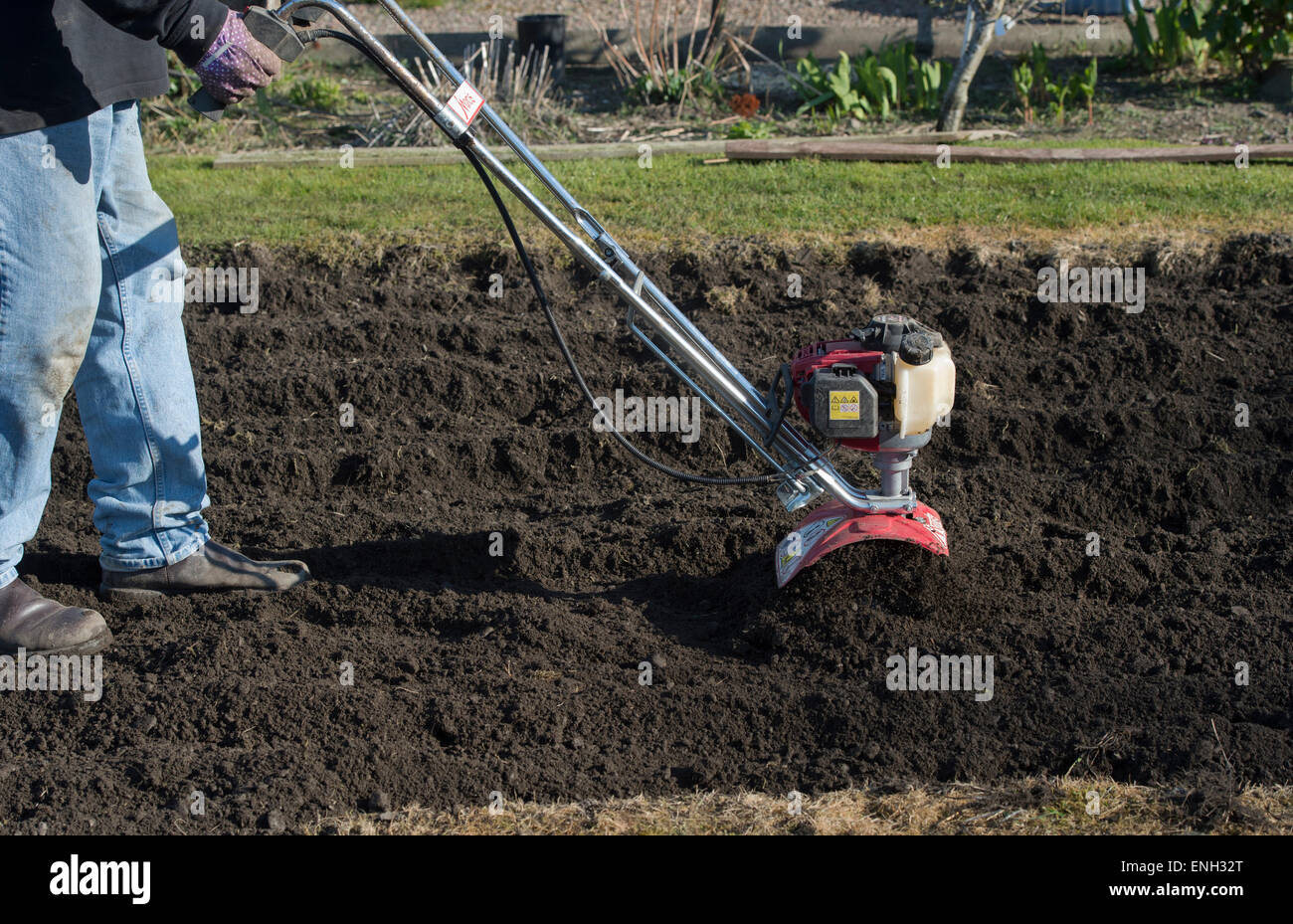 Gardener Rotavating A Vegetable Garden Preparing The Soil
