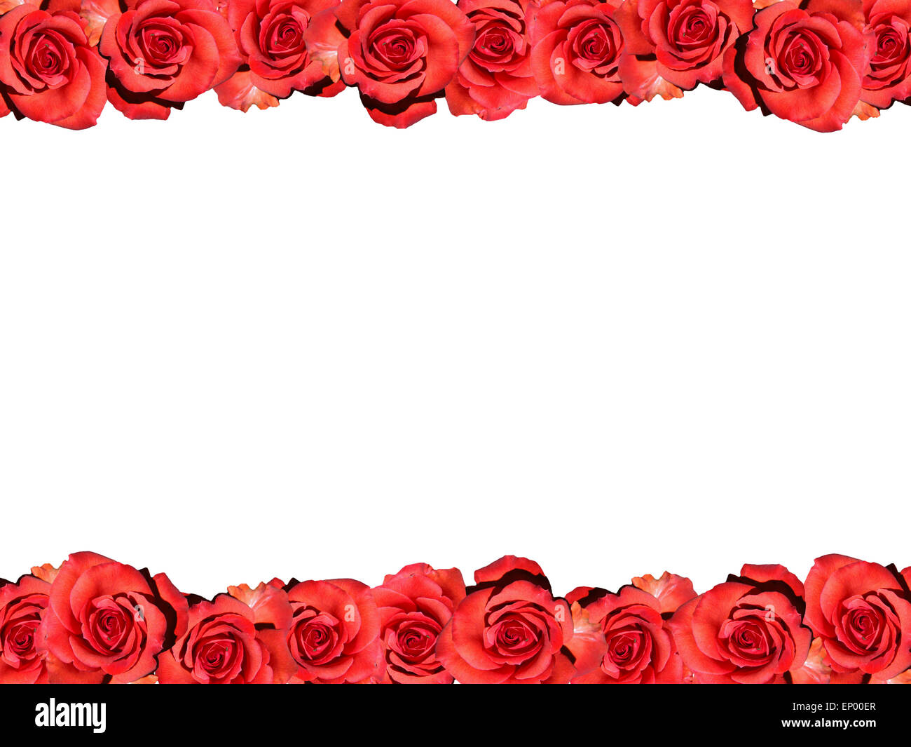Rahmen: Rote Rosen   Symbolbild Liebe/ Valentinstag/ Frame: Red Rose    Symbolic Image For Love, Afection And Valentines Day.