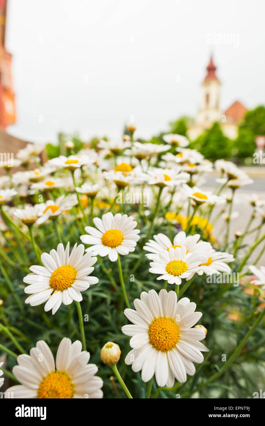 Colored flowers in front of florists shop stock photo 82843982 alamy colored flowers in front of florists shop izmirmasajfo