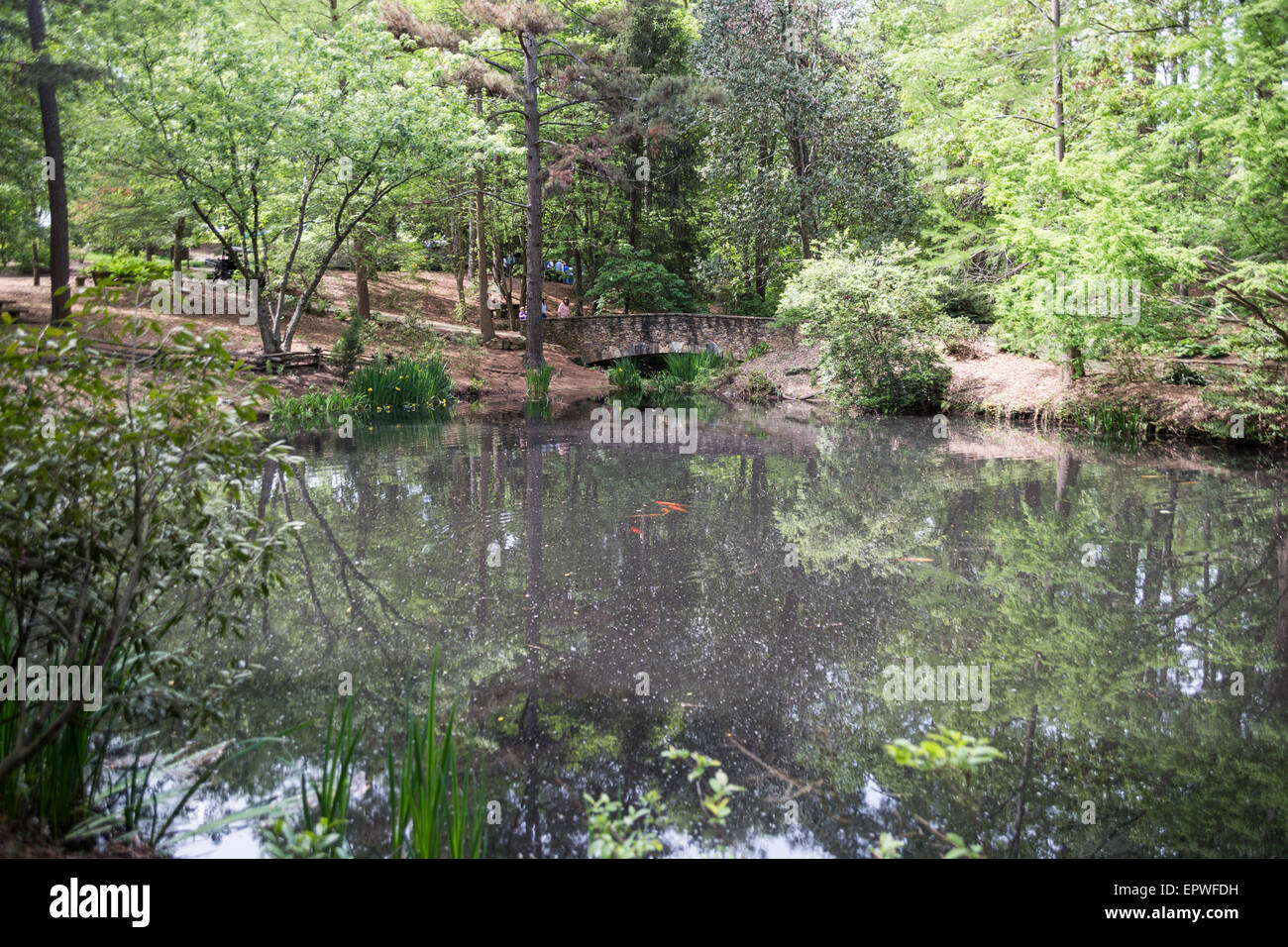 Heritage Pond, South Carolina Botanical Gardens, Clemson, South Carolina,  USA
