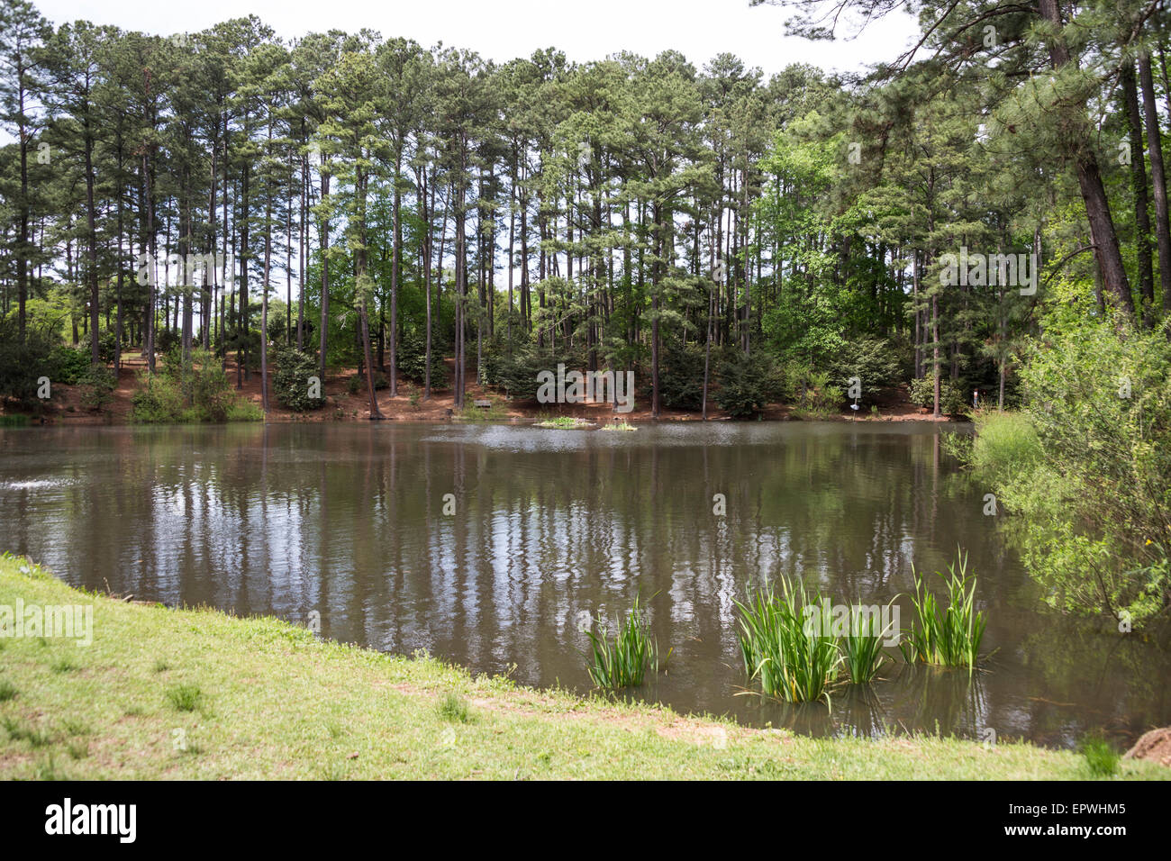 Duck Pond, South Carolina Botanical Gardens, Clemson, South Carolina, USA