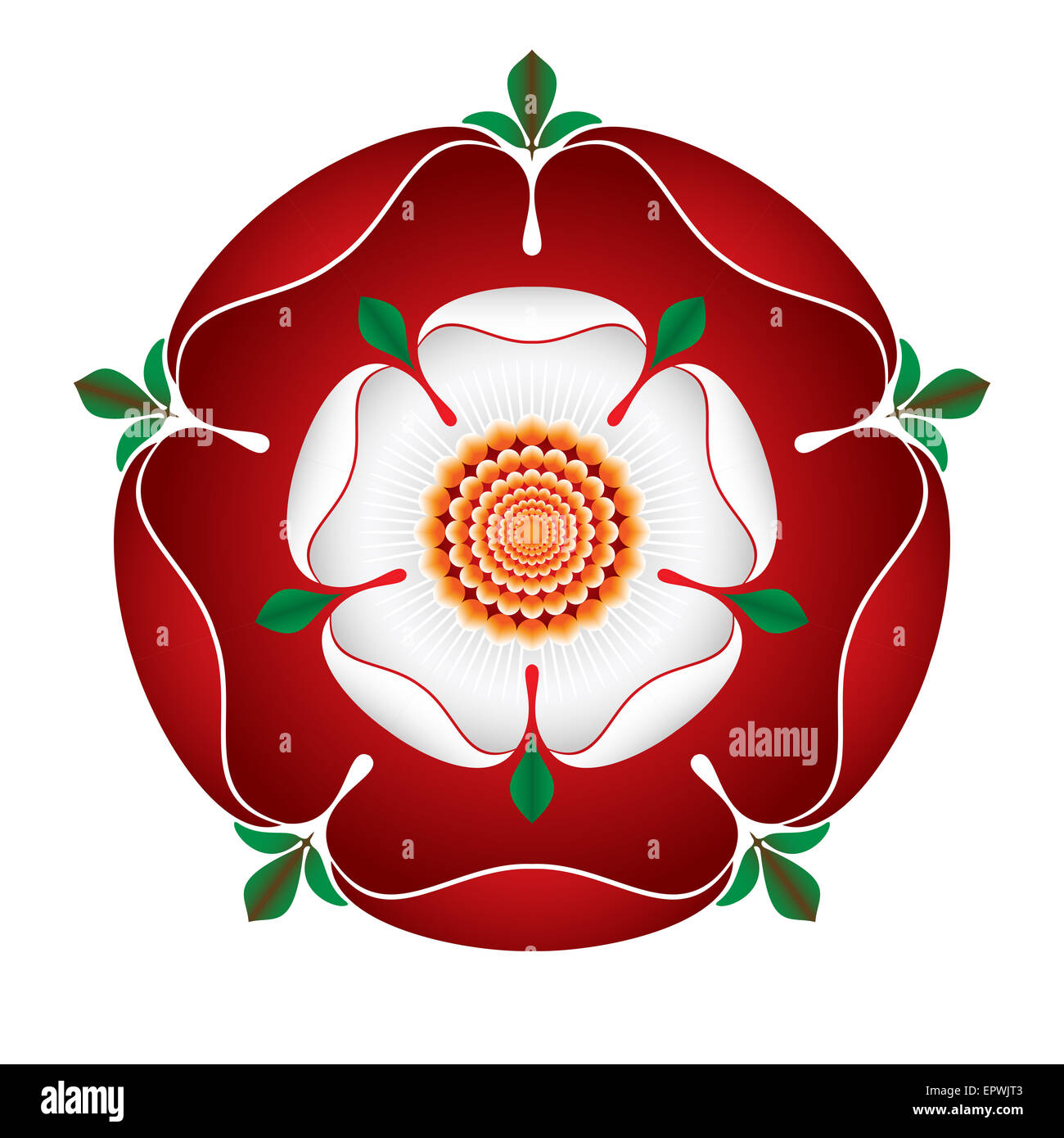 tudor dynasty rose shaded illustration english symbol red rose stock photo royalty free. Black Bedroom Furniture Sets. Home Design Ideas