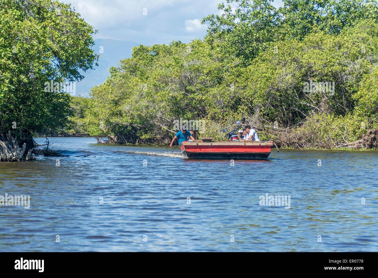 Mangrove    mar  e basse  zone de fray  re o   les alevins pullulent