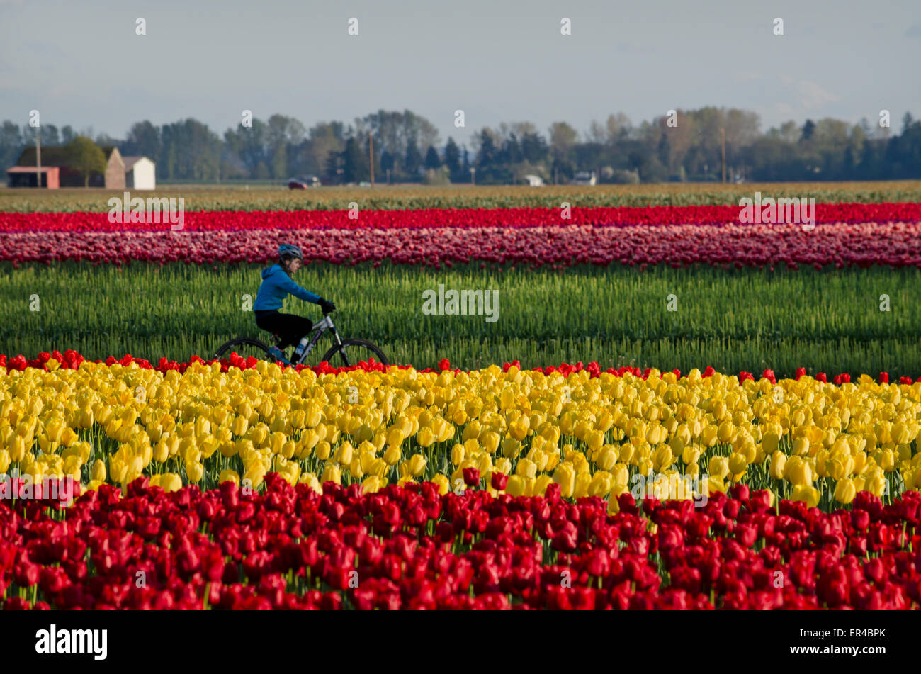 cyclist-riding-by-the-colourful-tulip-fi
