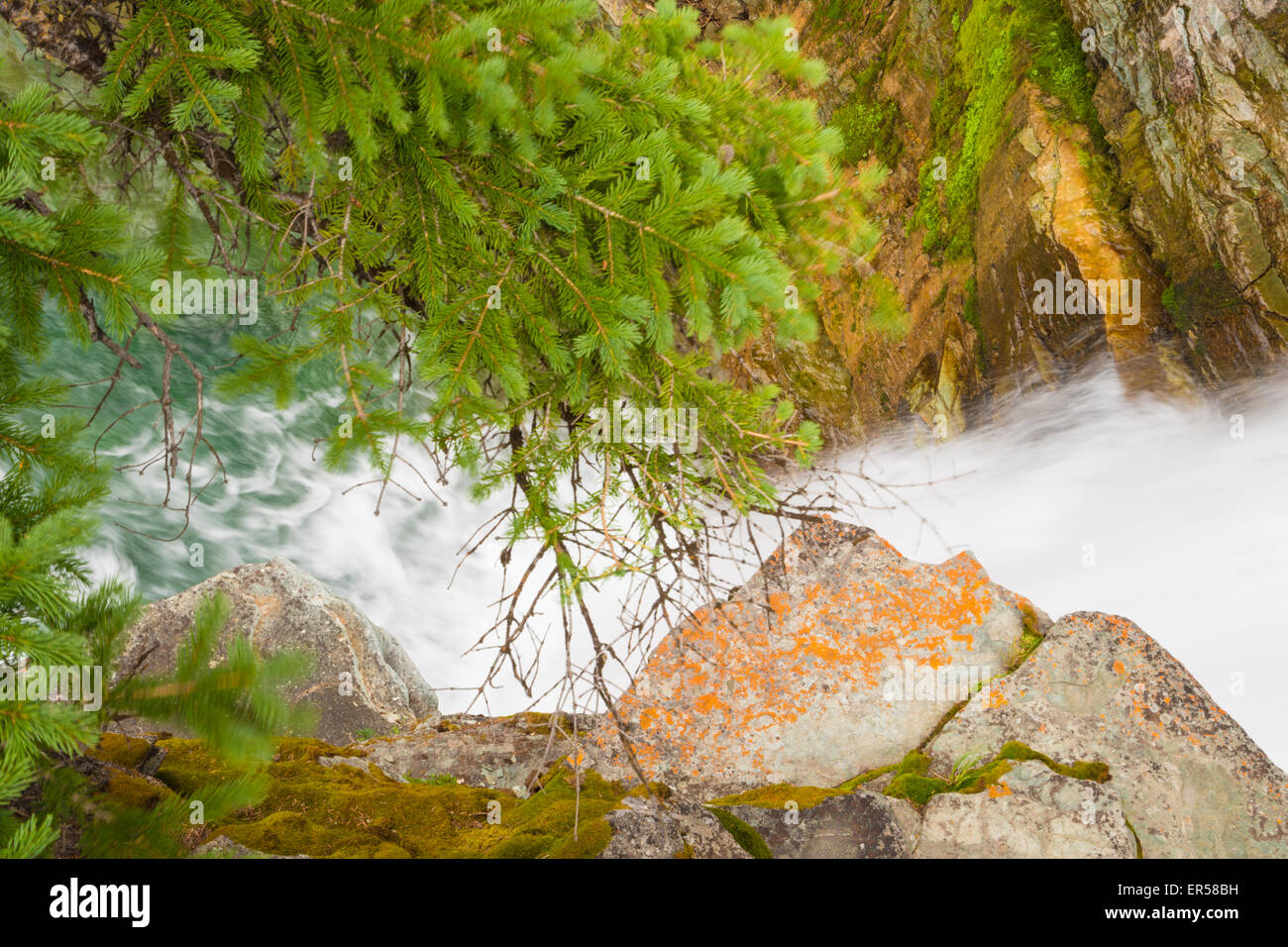 A rocky mountain stream cascading through lichen and moss covered a rocky mountain stream cascading through lichen and moss covered rocks and spruce trees in waterton national park alberta sciox Image collections