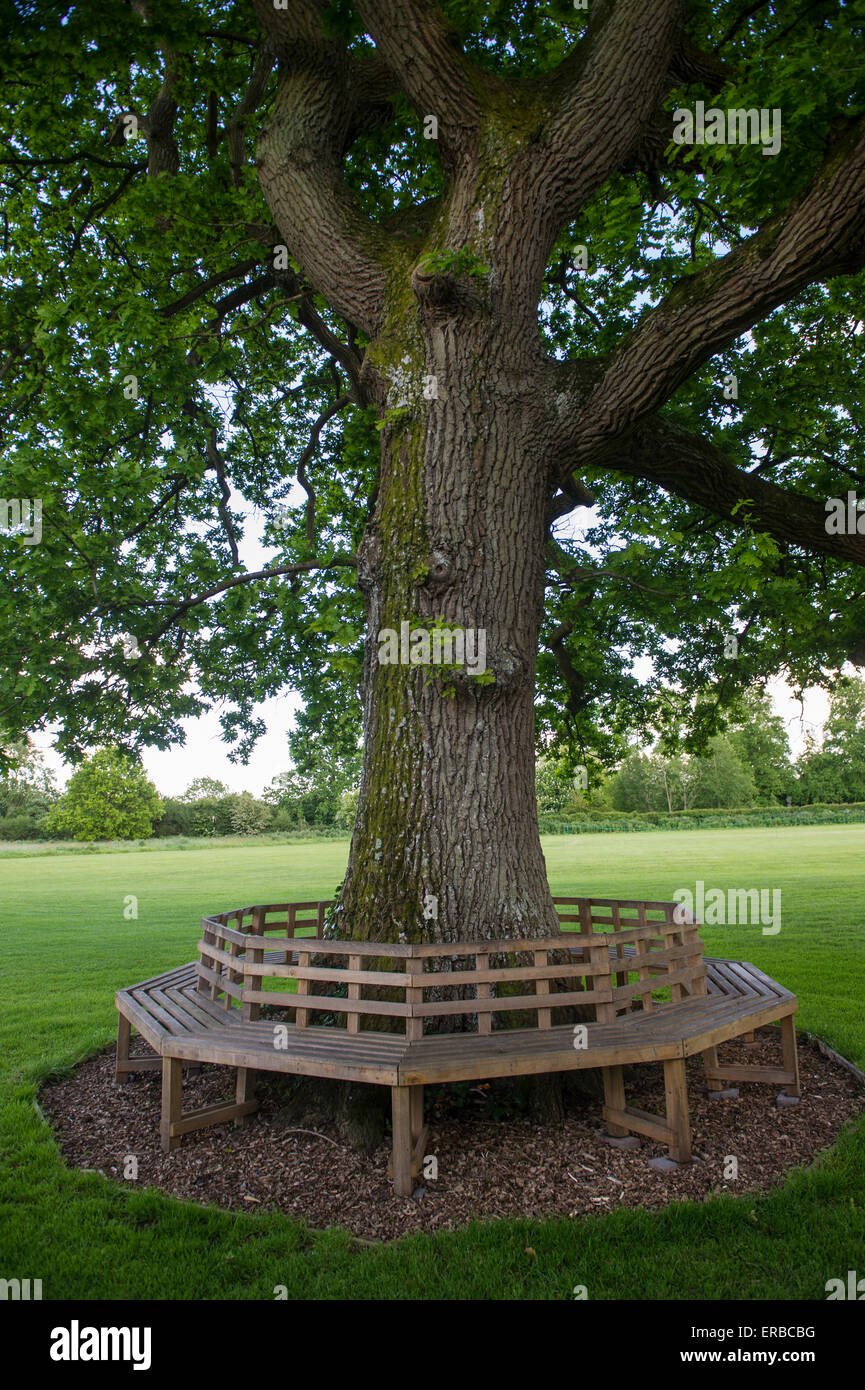 A circular bench around an oak tree on a village green stock photo royalty free image 83229764 Circular tree bench