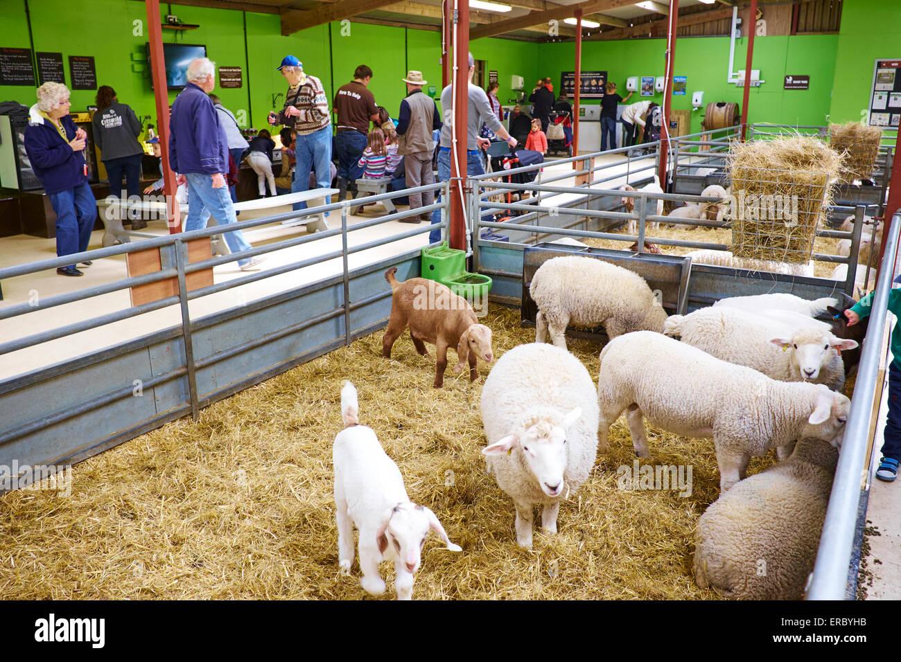 Inside The Touch Barn At Cotswold Farm Park Bemborough Kineton UK