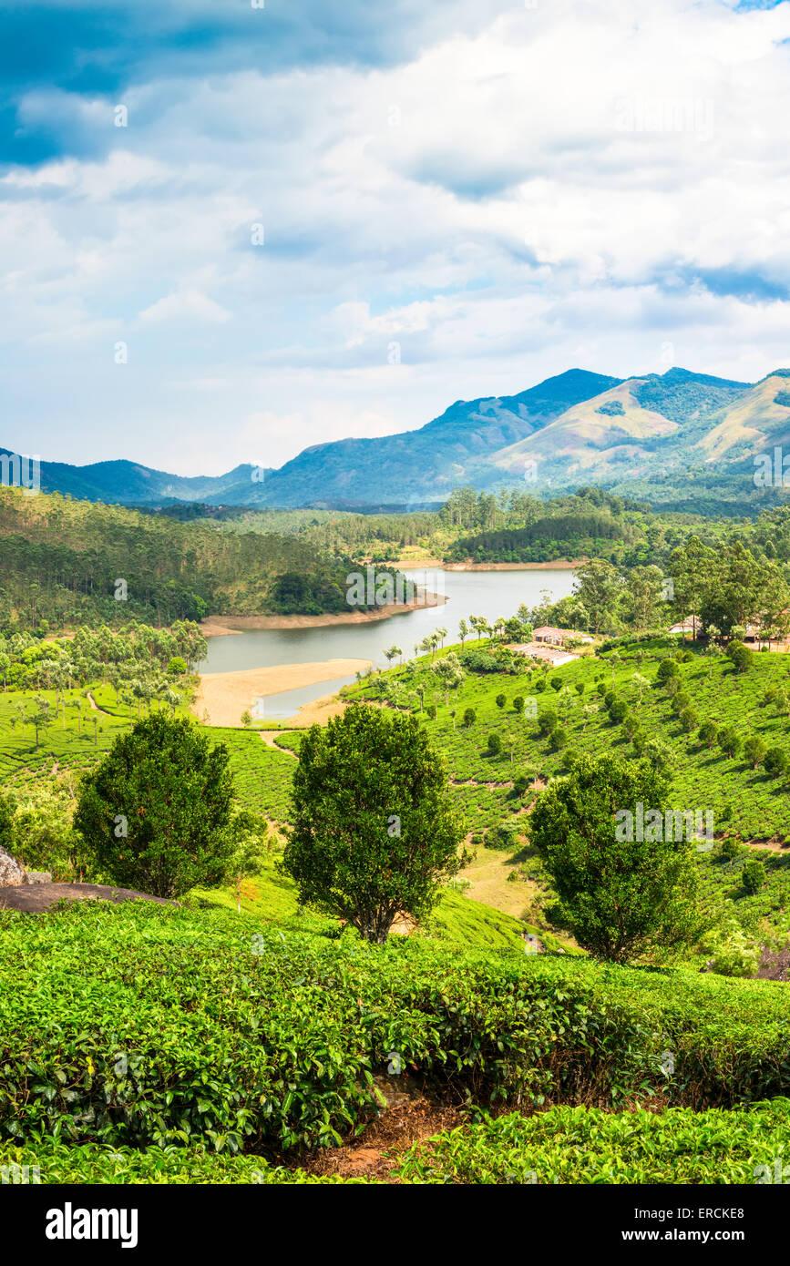 Beautiful Tea Estates In India
