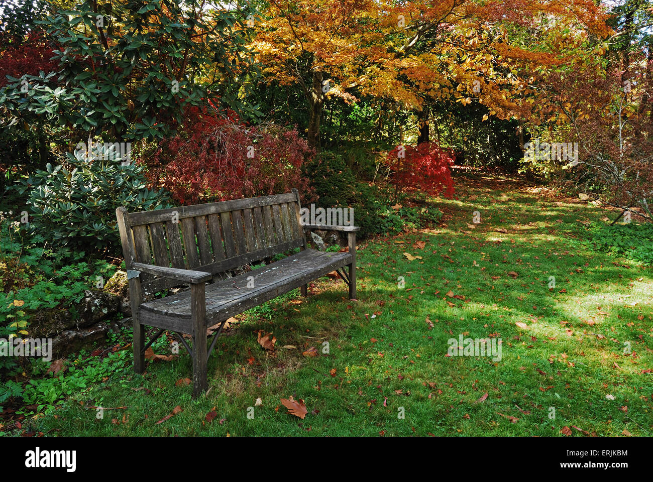 Single wooden bench in an autumn park with colored trees everywhere ...