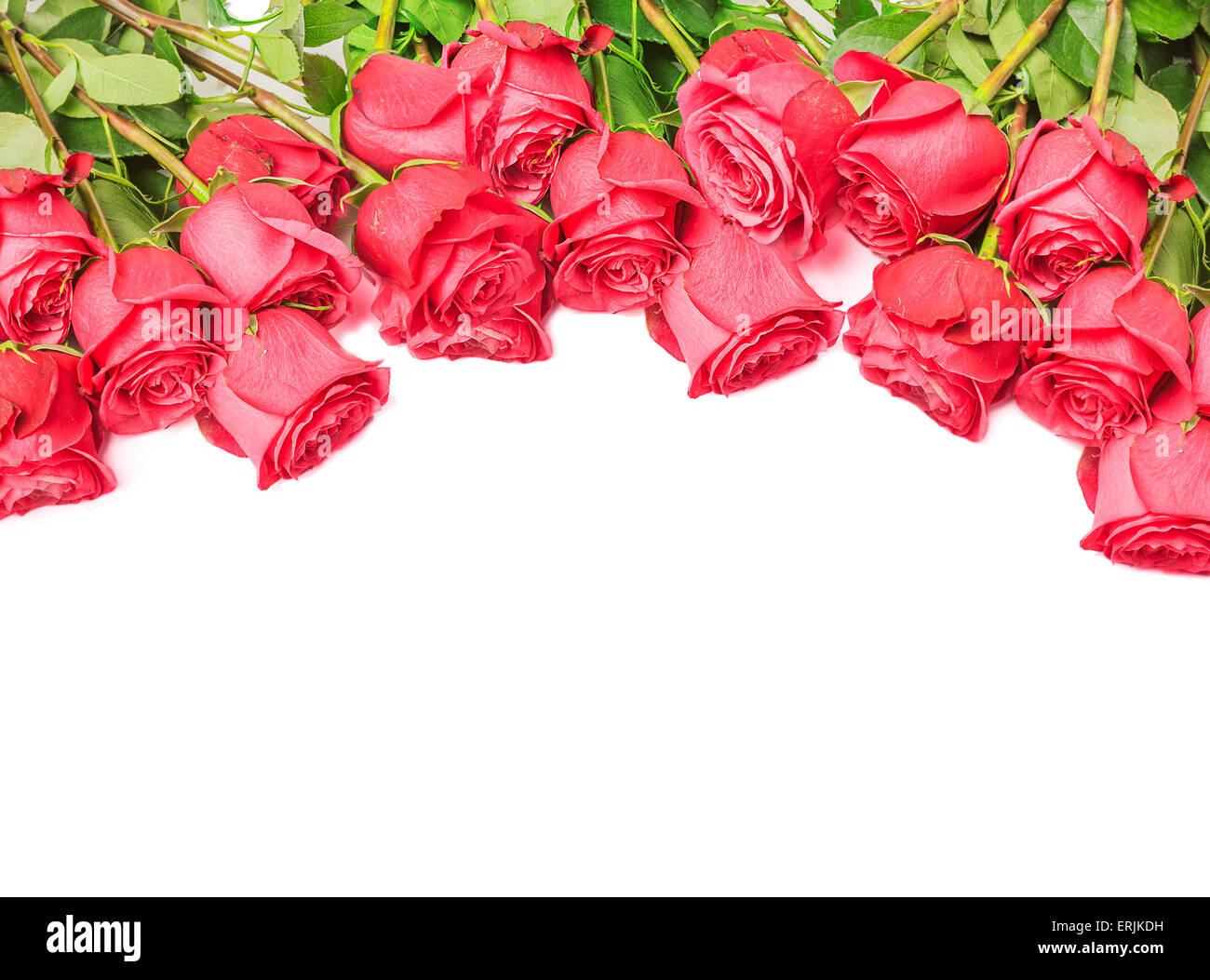 Border from beautiful pink roses isolated on white ...