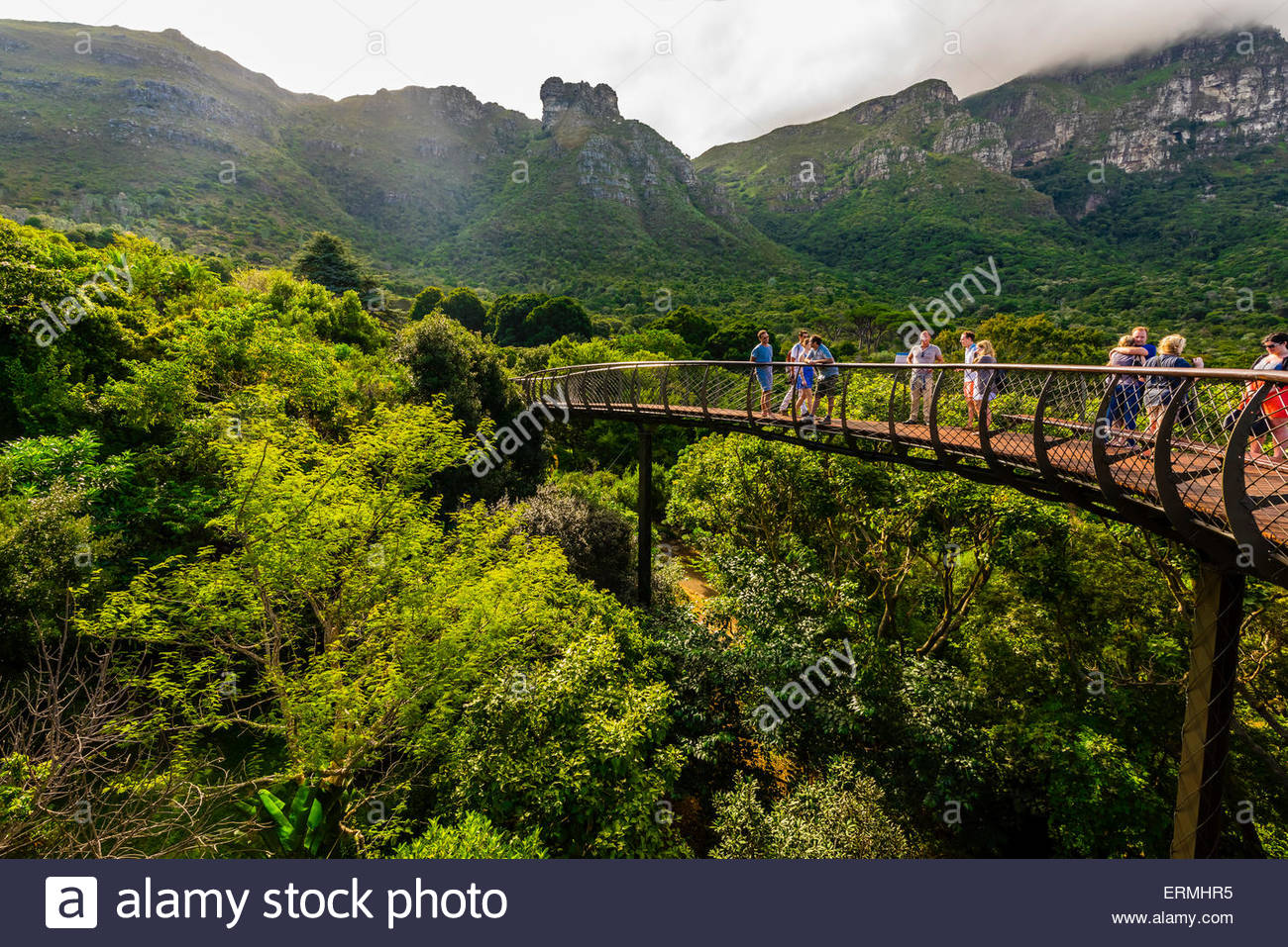 Tree Canopy Walkway Kirstenbosch National Botanical Garden Cape Stock Photo 83431577 Alamy