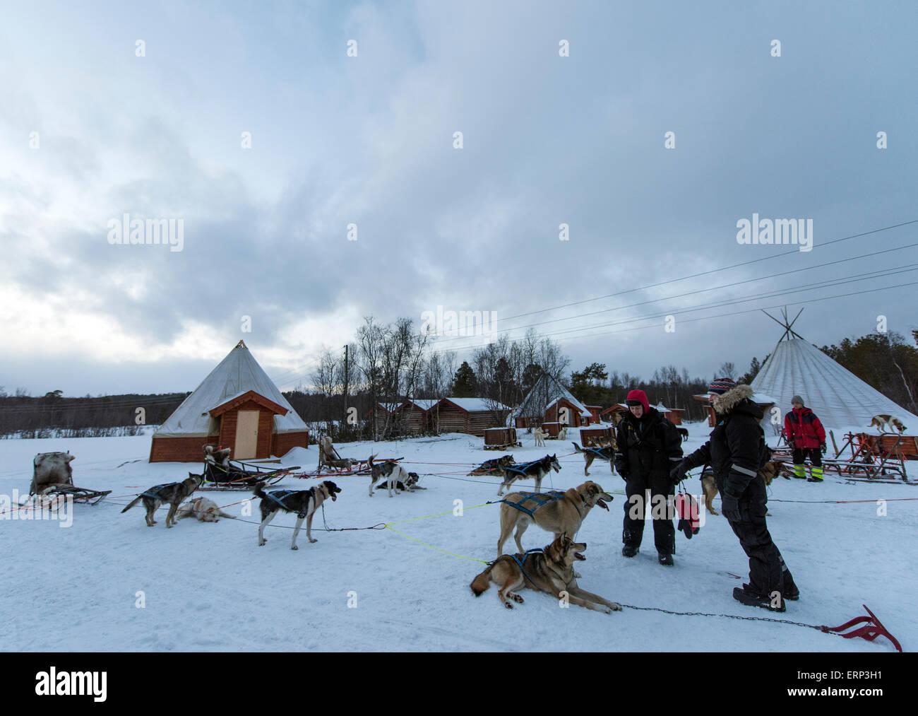 husky farm and dog sledding alta norway scandinavia europe stock