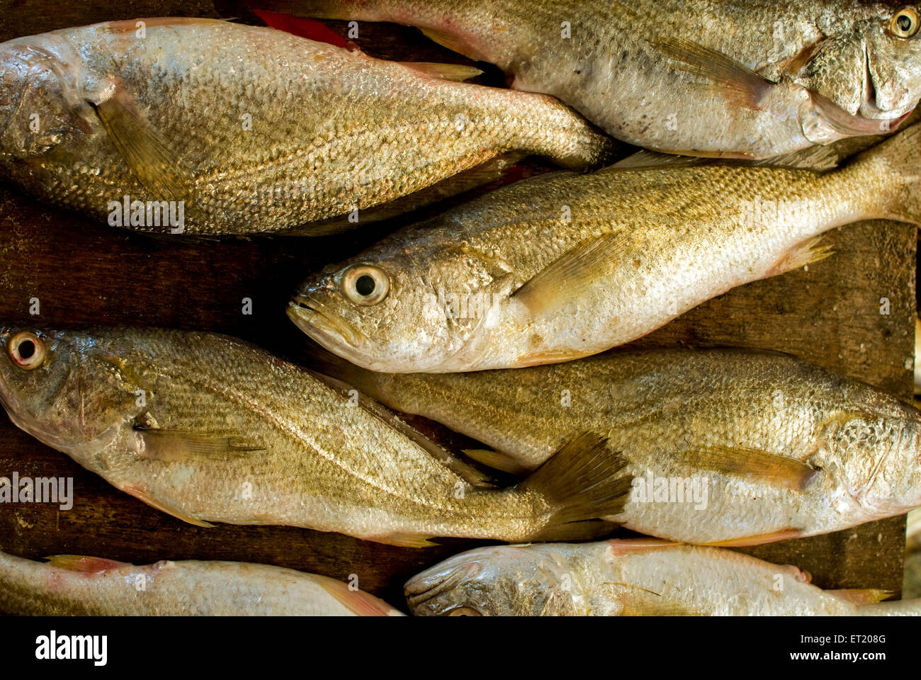 Bhangdha king fish for sale at fish market goa india for Stock fish for sale