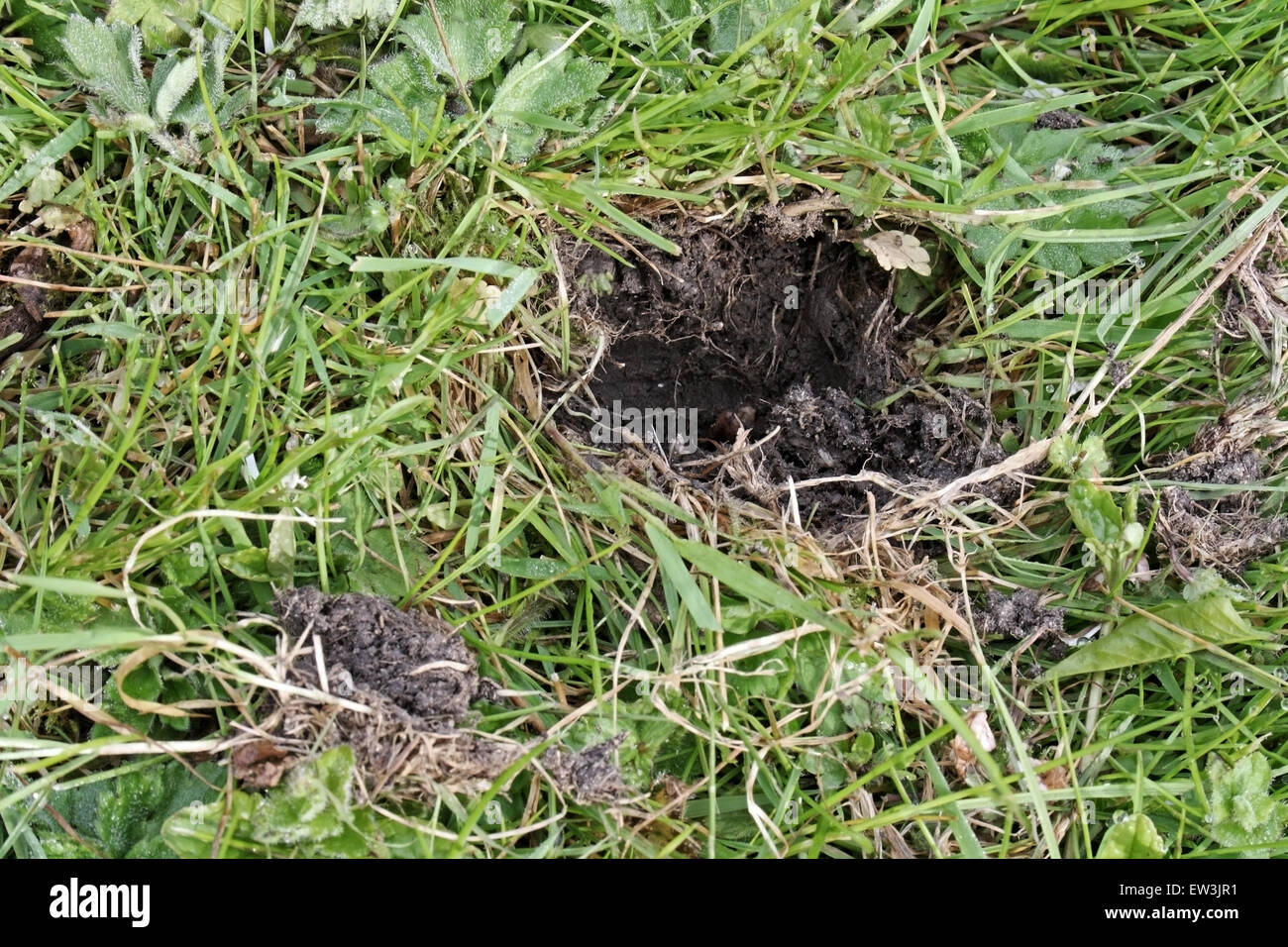 how to stop foxes digging up your garden