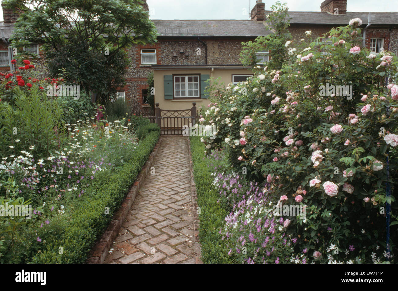 Brick Herringbone Paved Path With Box Edging Between Borders With Pink  Roses In Cottage Garden