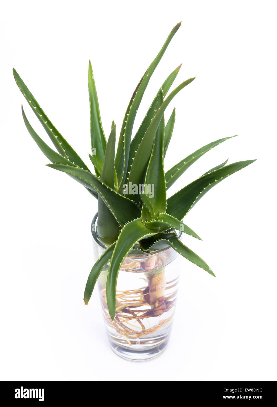 aloe vera care instructions