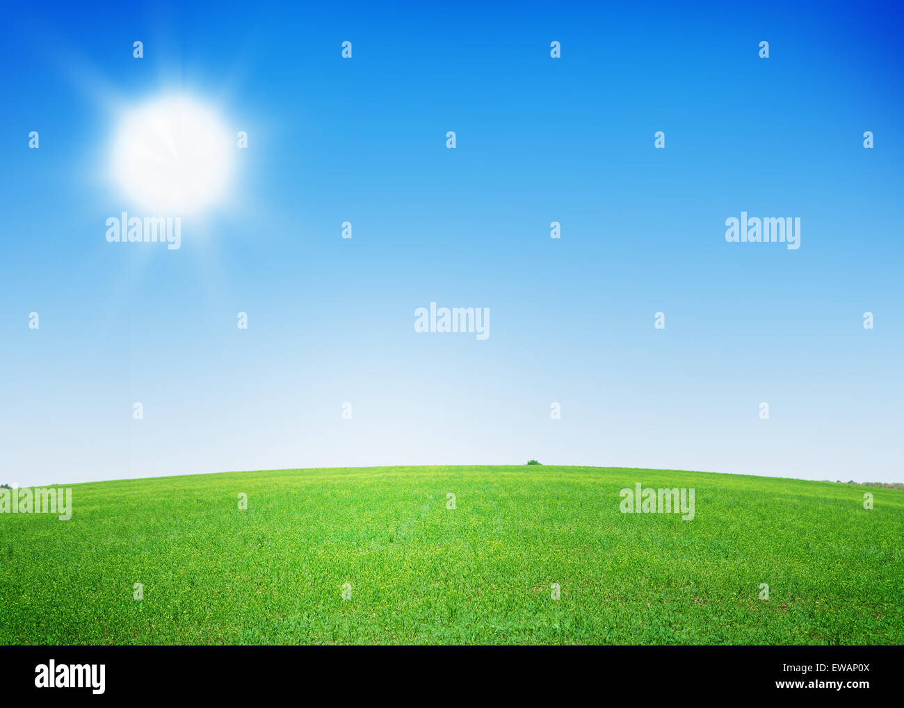 grass field background with flowers. Green Grass Field And Clear Blue Sky Background With Flowers