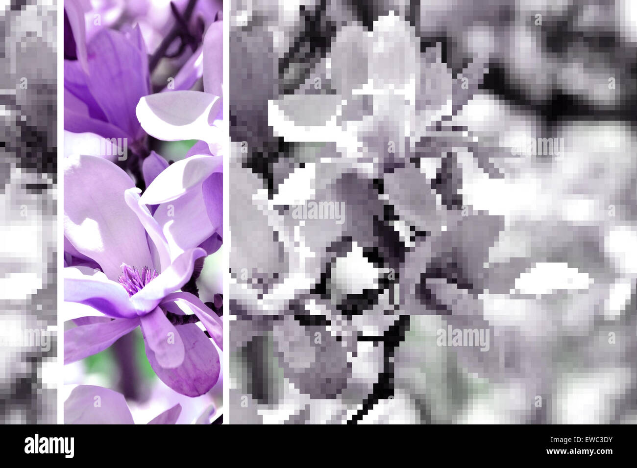 flowers-with-violet-and-pixelated-effect