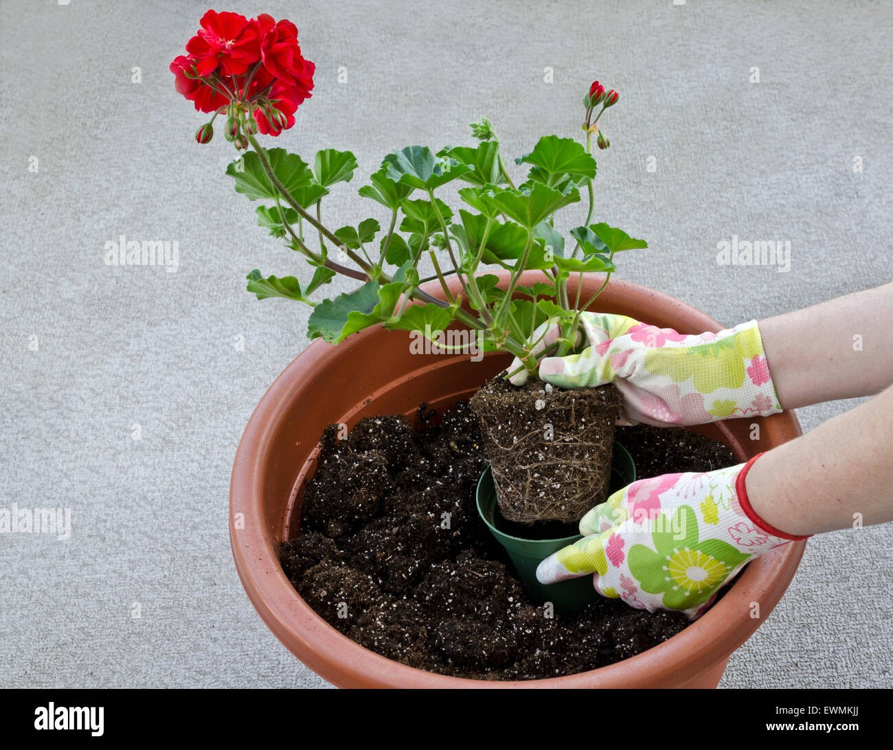 container-gardening-potting-a-plant-step