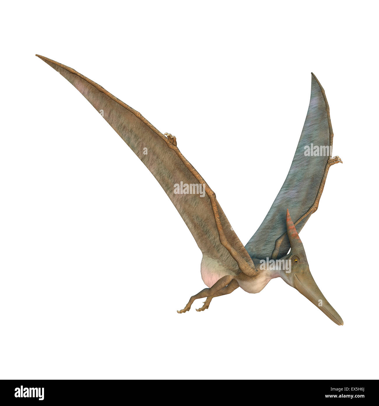 3d digital render of a pteranodon flying isolated on white