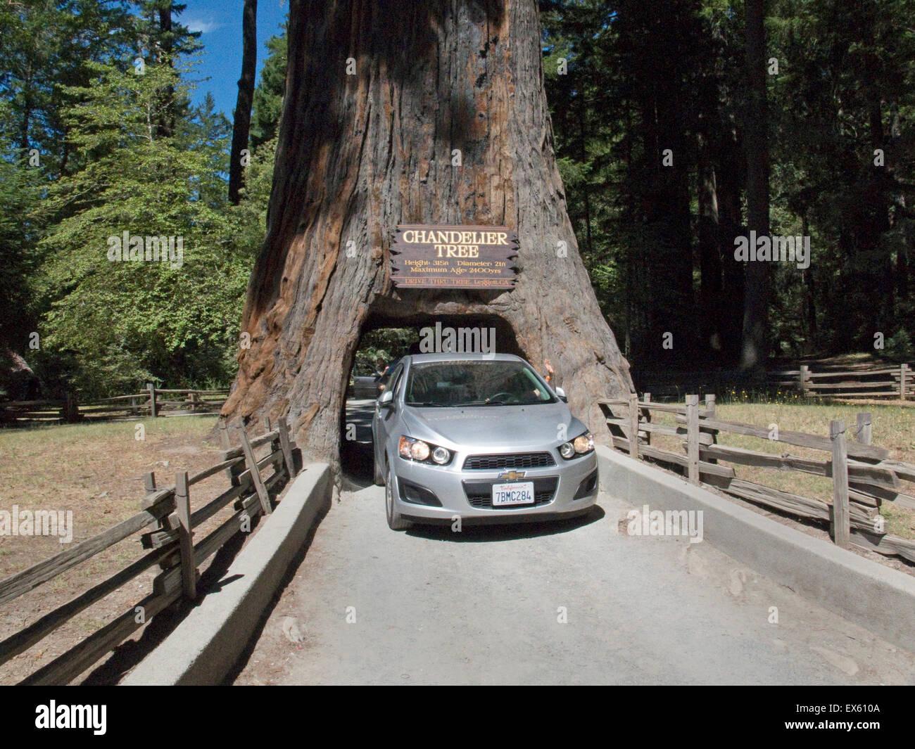 Leggett, California. Chandelier Tree in Drive-Thru Tree Park, a ...