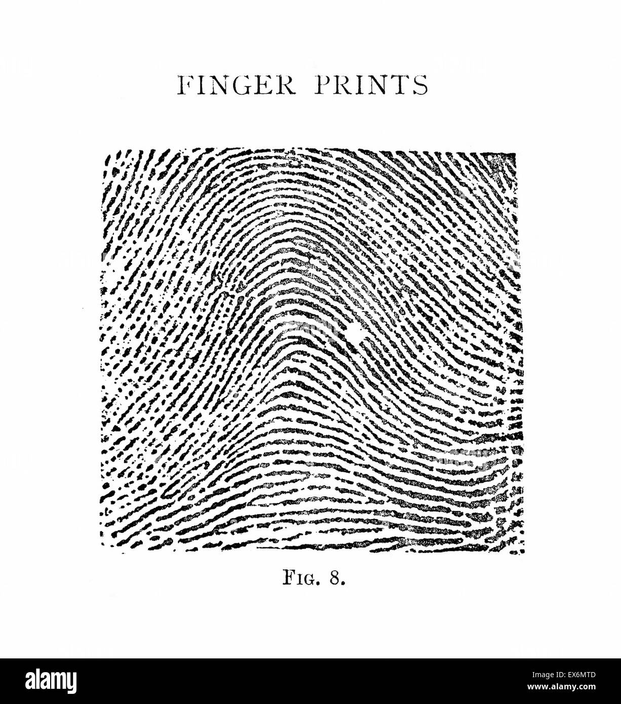 henry system Henry classification system: a summary primary each finger has a definite numerical value when a whorl type pattern is present the total of these values make up the .