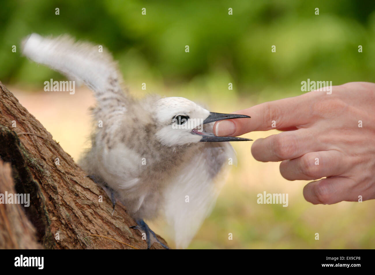 how to stop a baby bird from biting
