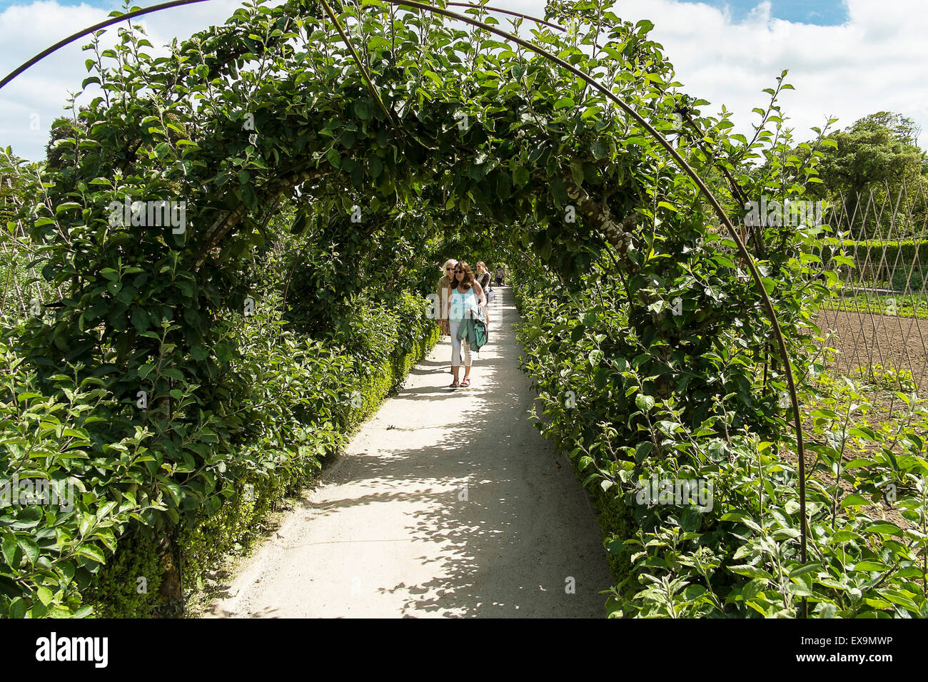 Vegetable garden with covered walkways - An Ornamental Covered Walkway In The Vegetable Garden In The Lost Gardens Of Heligan In Cornwall