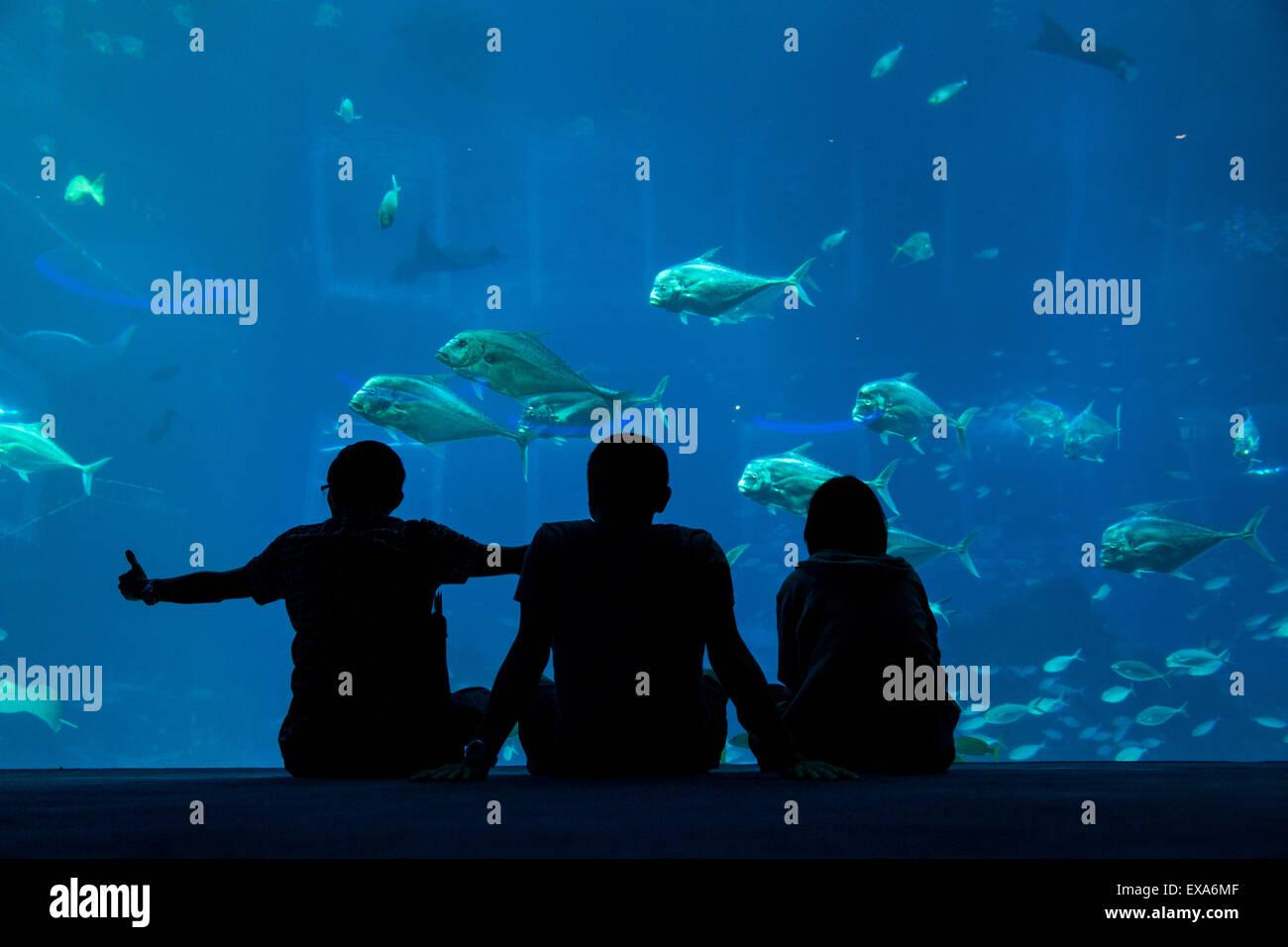 Aquarium fish tank singapore - Asia Singapore Silhouette Of Tourists Sitting In Front Of Massive Fish Tank Inside S E A Aquarium