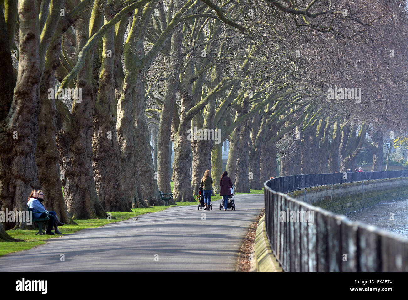 Landscapes along the south bank - Stock Photo Two Women Walking Along An Avenue Of Plane Trees In Wandsworth Park On The South Bank Of The River Thames At Putney