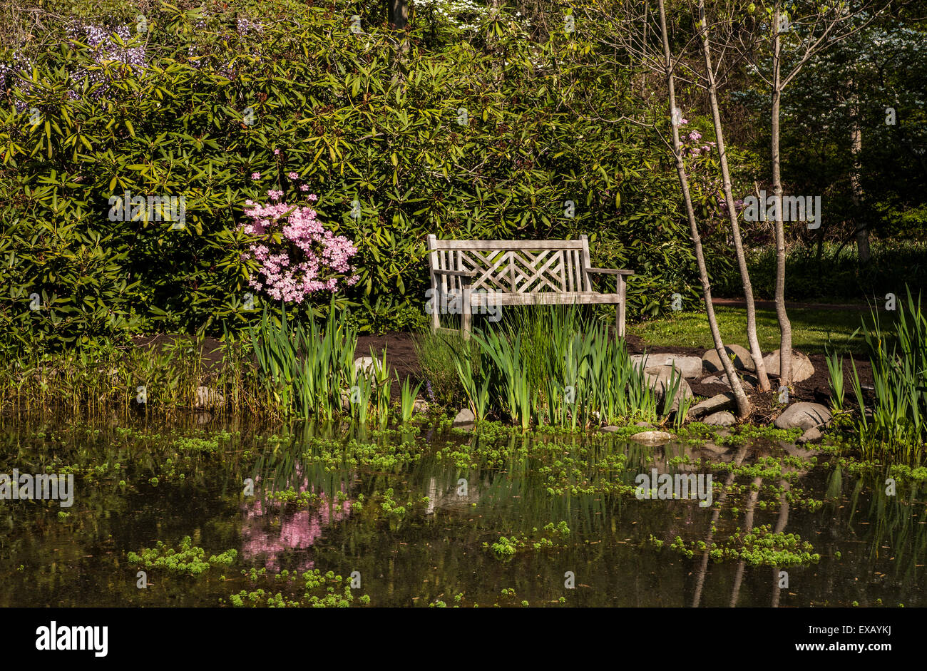 stock photo wooden garden bench or love seat and a pond reflection in a flower garden in mercer county new jersey usa