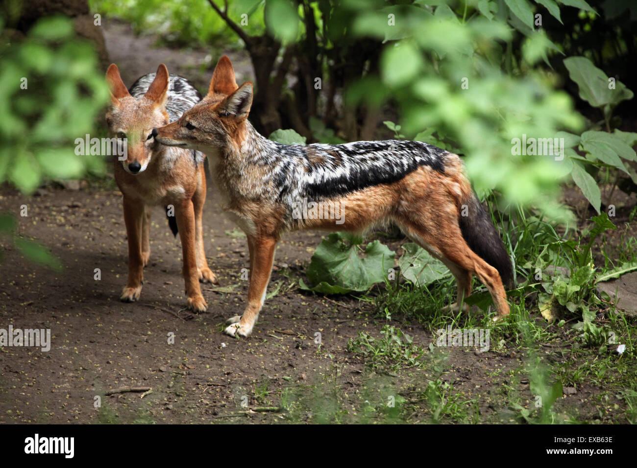 Canis ústí nad labem