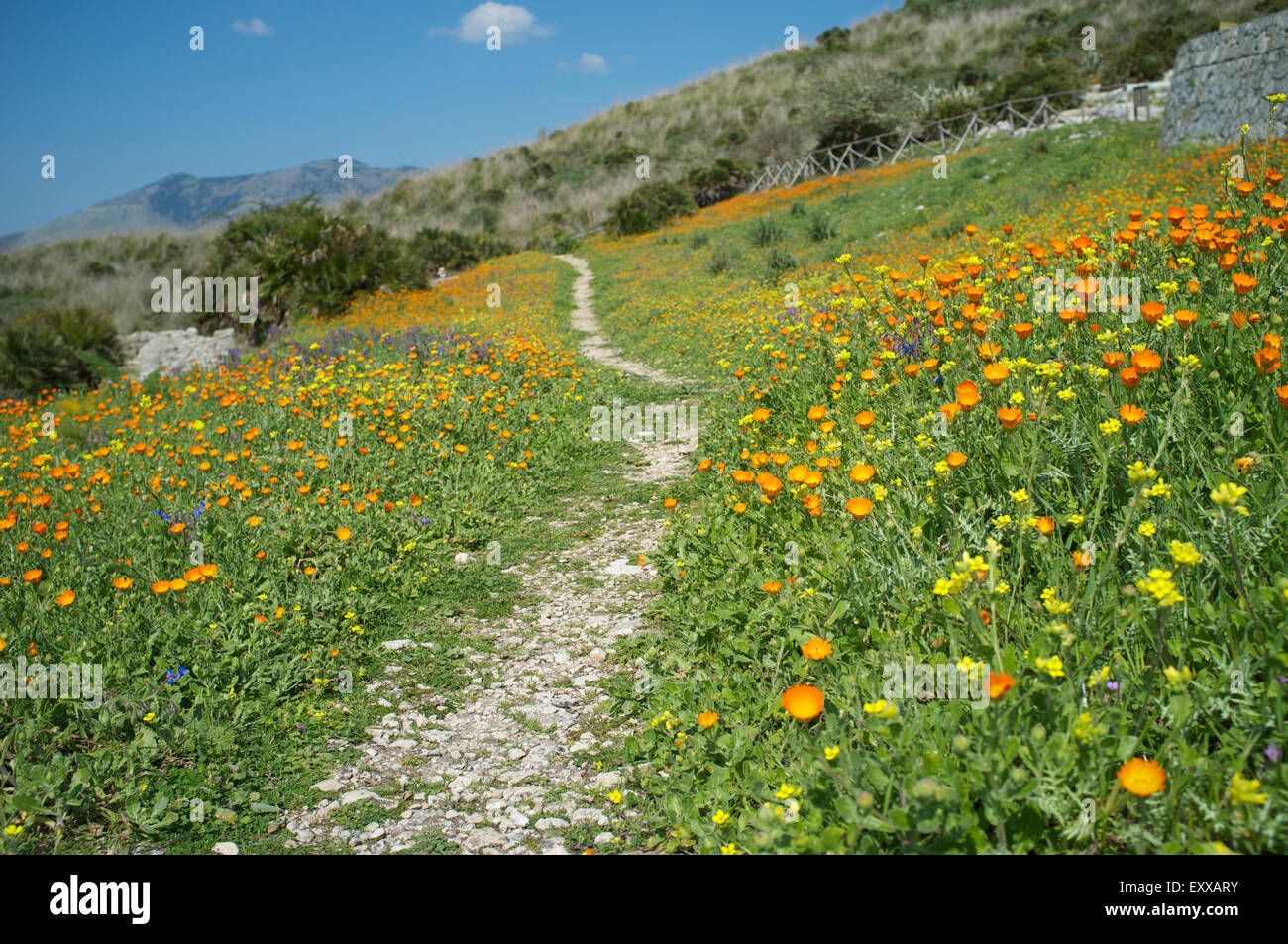 a small path running on the slope of the hill covered by spring