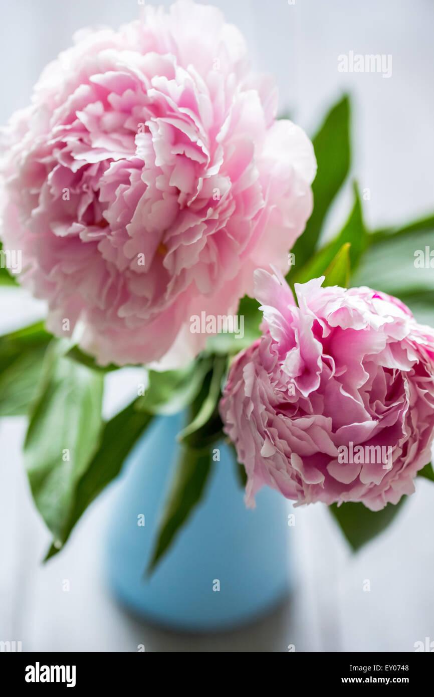 Pink peonies in vase on wood background stock photo royalty free pink peonies in vase on wood background reviewsmspy