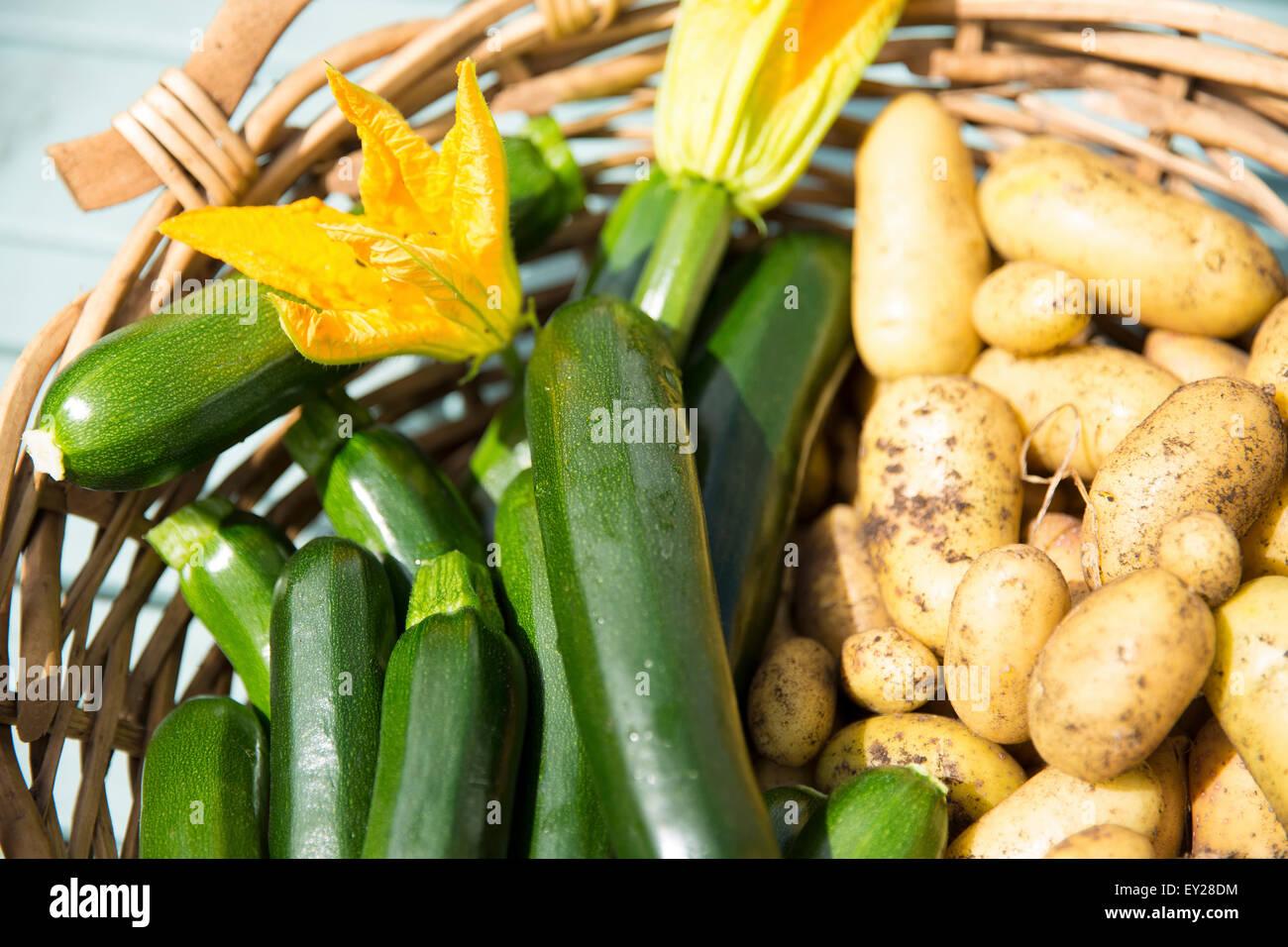 Home produce garden - Home Produce From Garden