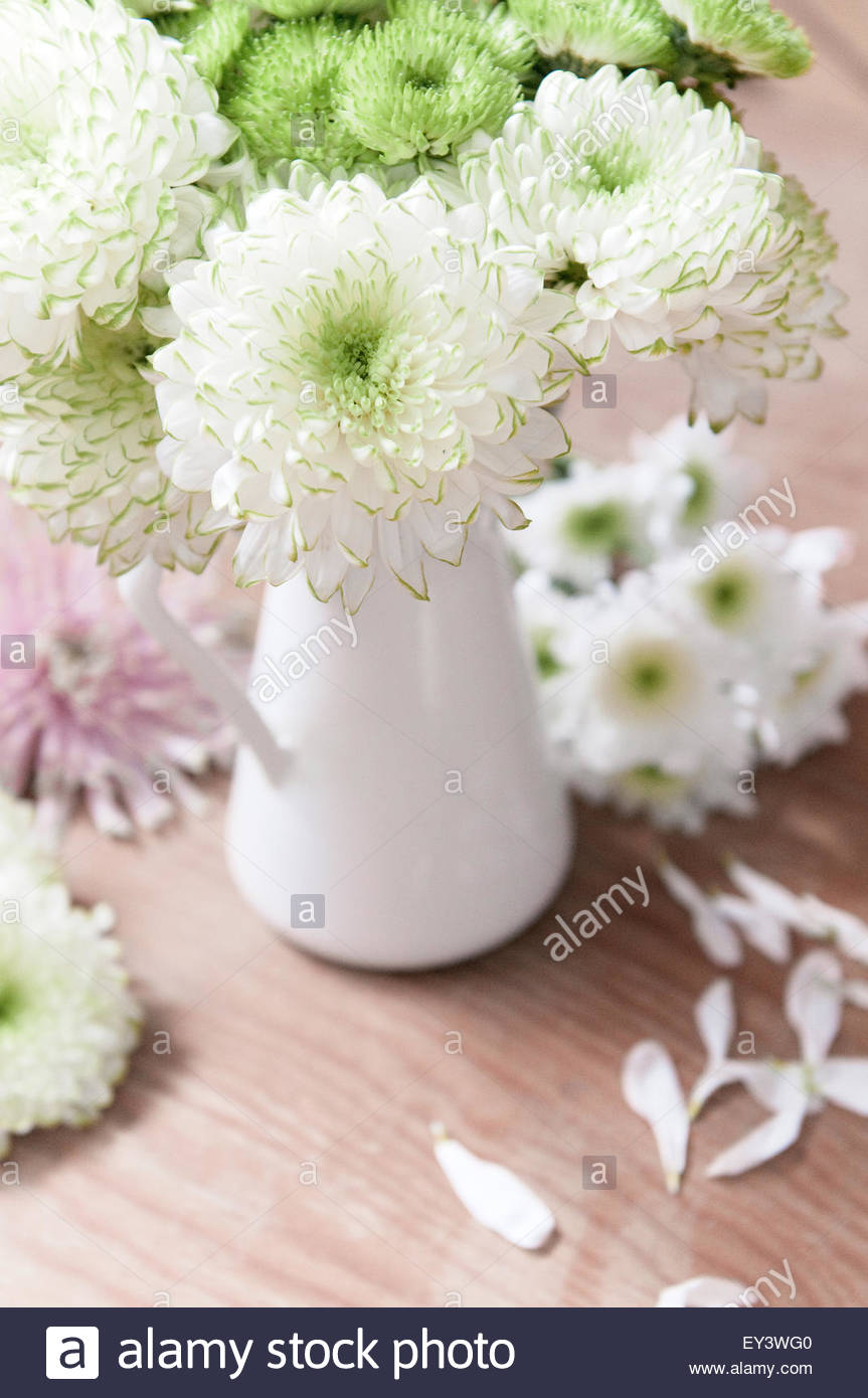 bouquet of white flowers with green ended petals chrysanthemum, Beautiful flower