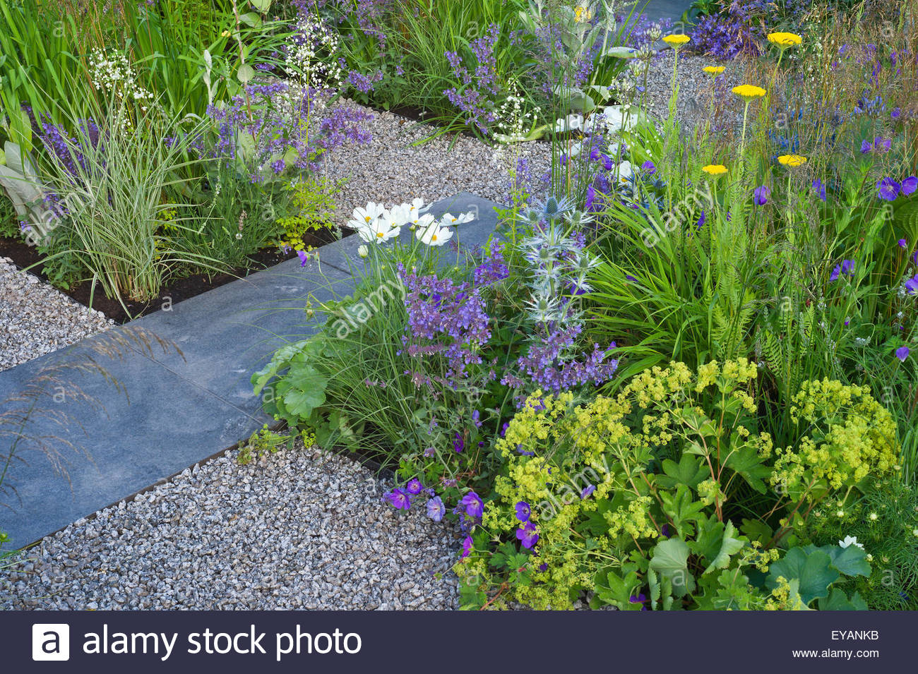 A Contemporary Garden With Gravel And Slate Paving, Gold Blue And White  Planting. Designers: Catherine Chenery, Barbara Harfleet