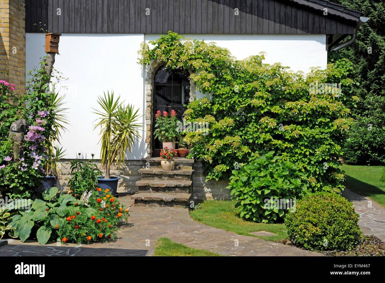 Front Garden Of A Country House Climbing Hydrangea