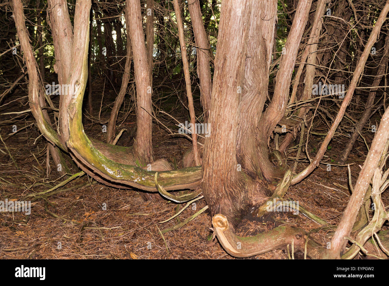 close-up-of-tree-where-the-roots-are-gro