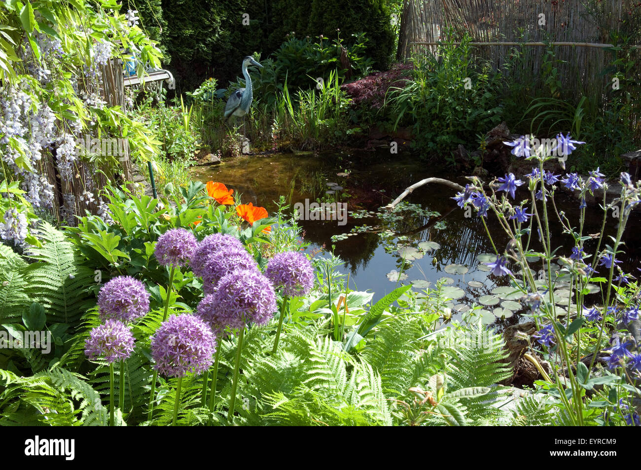Gartenteich  Gartenteich, Garden pond Stock Photo, Royalty Free Image: 85952057 ...
