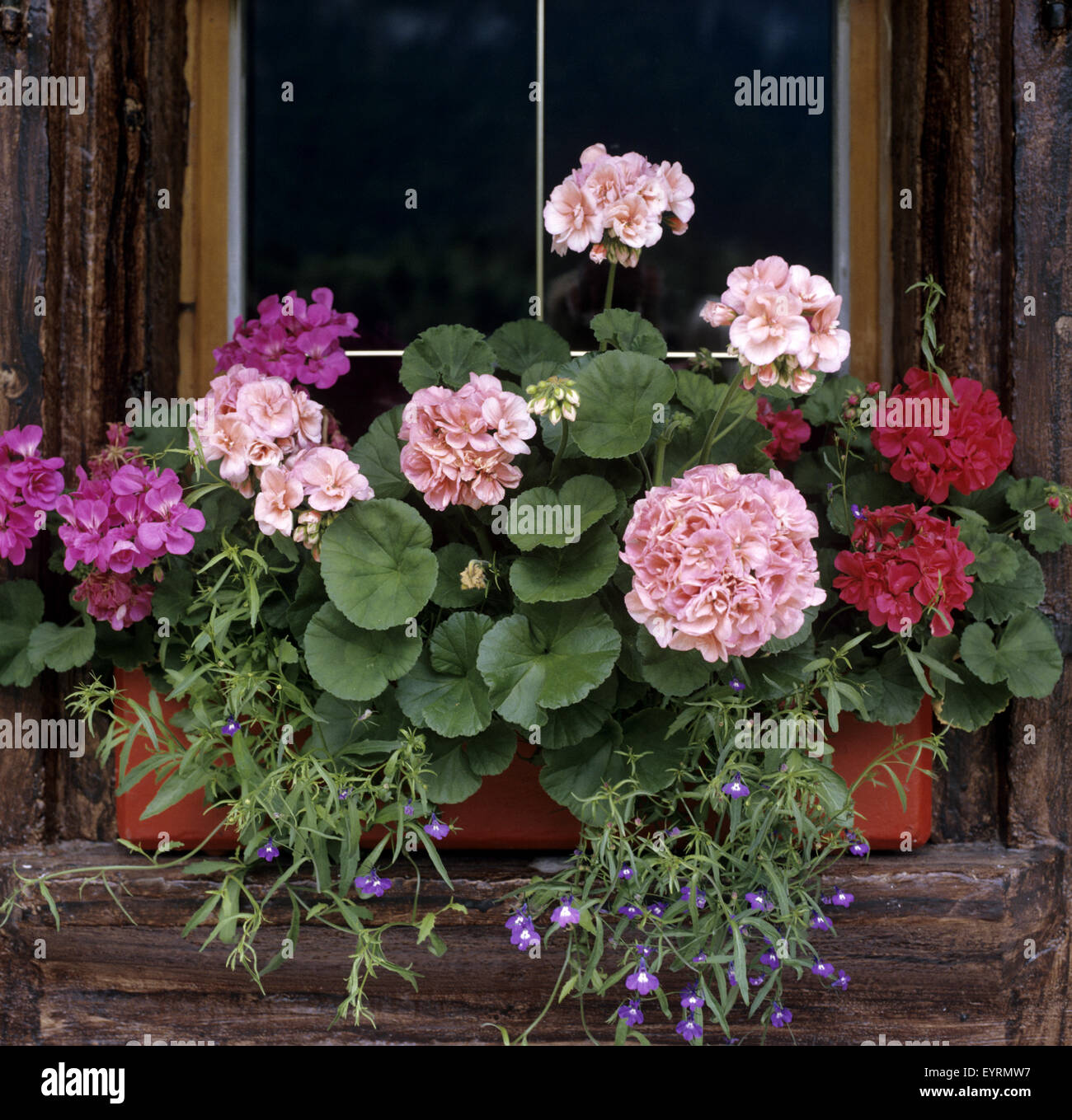 blumenfenster fenster mit blumen balkonblumen blumen auf terrasse stock photo royalty free. Black Bedroom Furniture Sets. Home Design Ideas