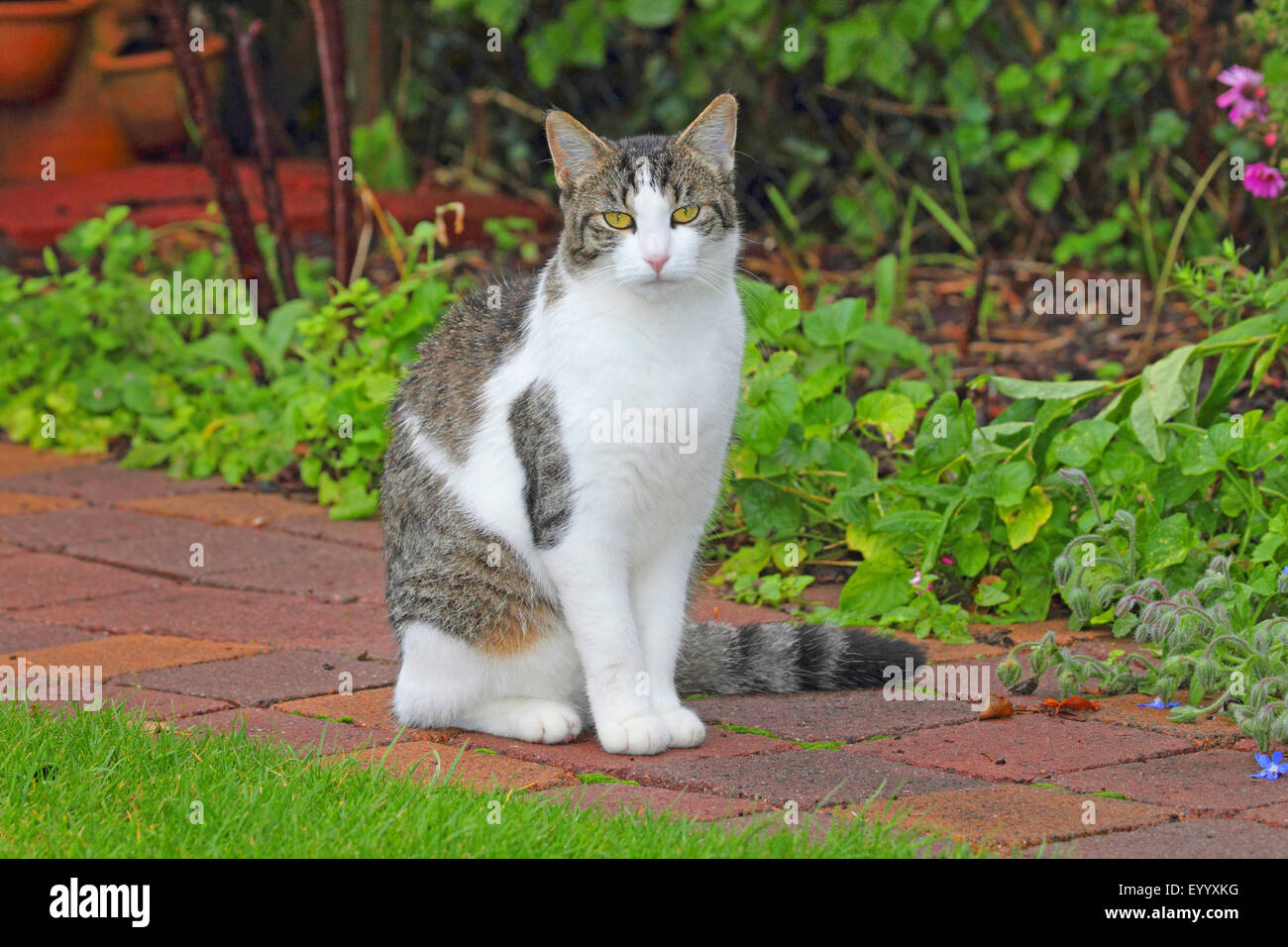 Housecat Related Keywords Housecat Long Tail Keywords
