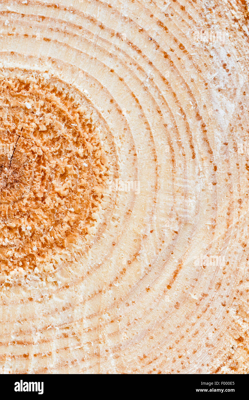 Delightful Pine Tree Timber #9: Annual Rings On Sawn Pine Tree Timber Wood Texture Background