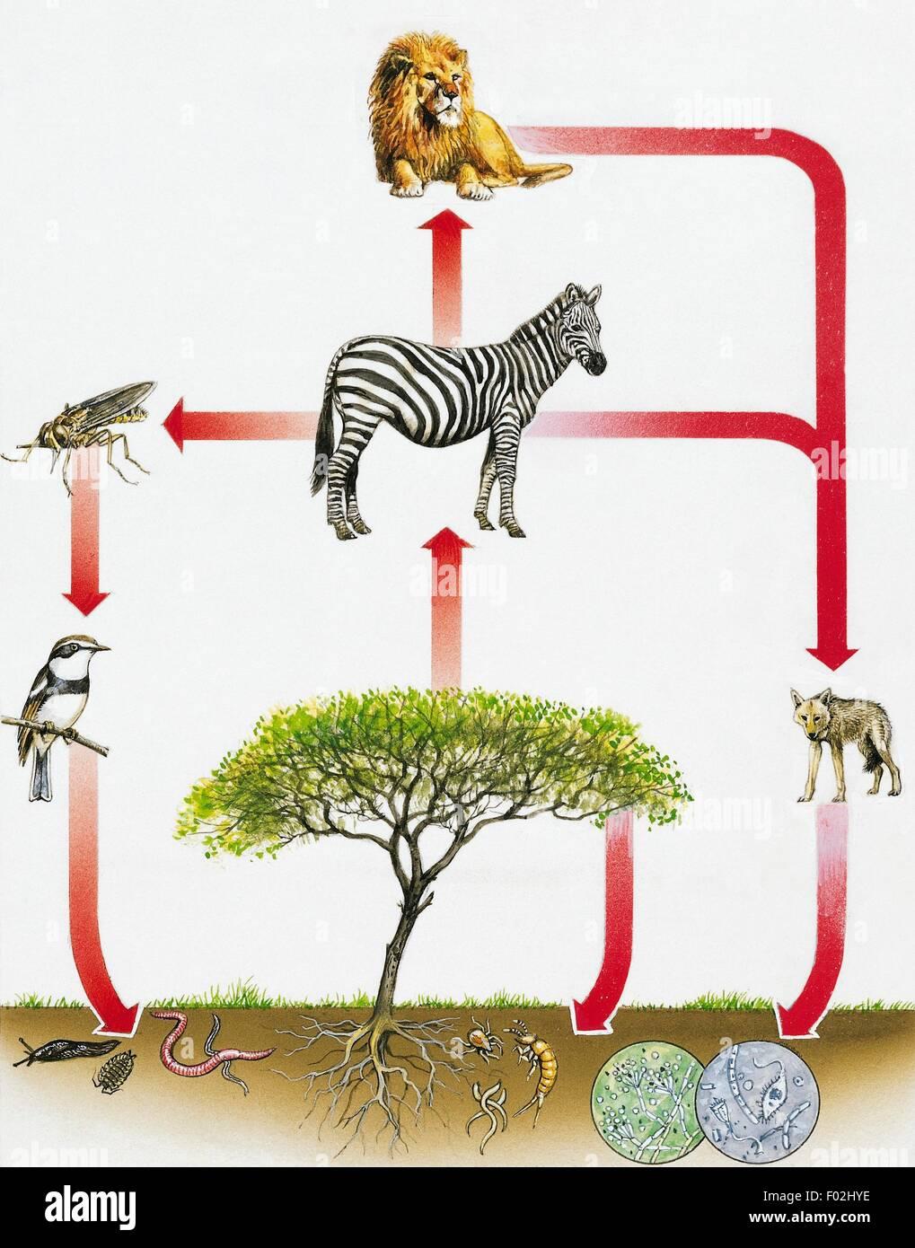Ecosystem diagram drawing stock photo 86109842 alamy ecosystem diagram drawing pooptronica Image collections