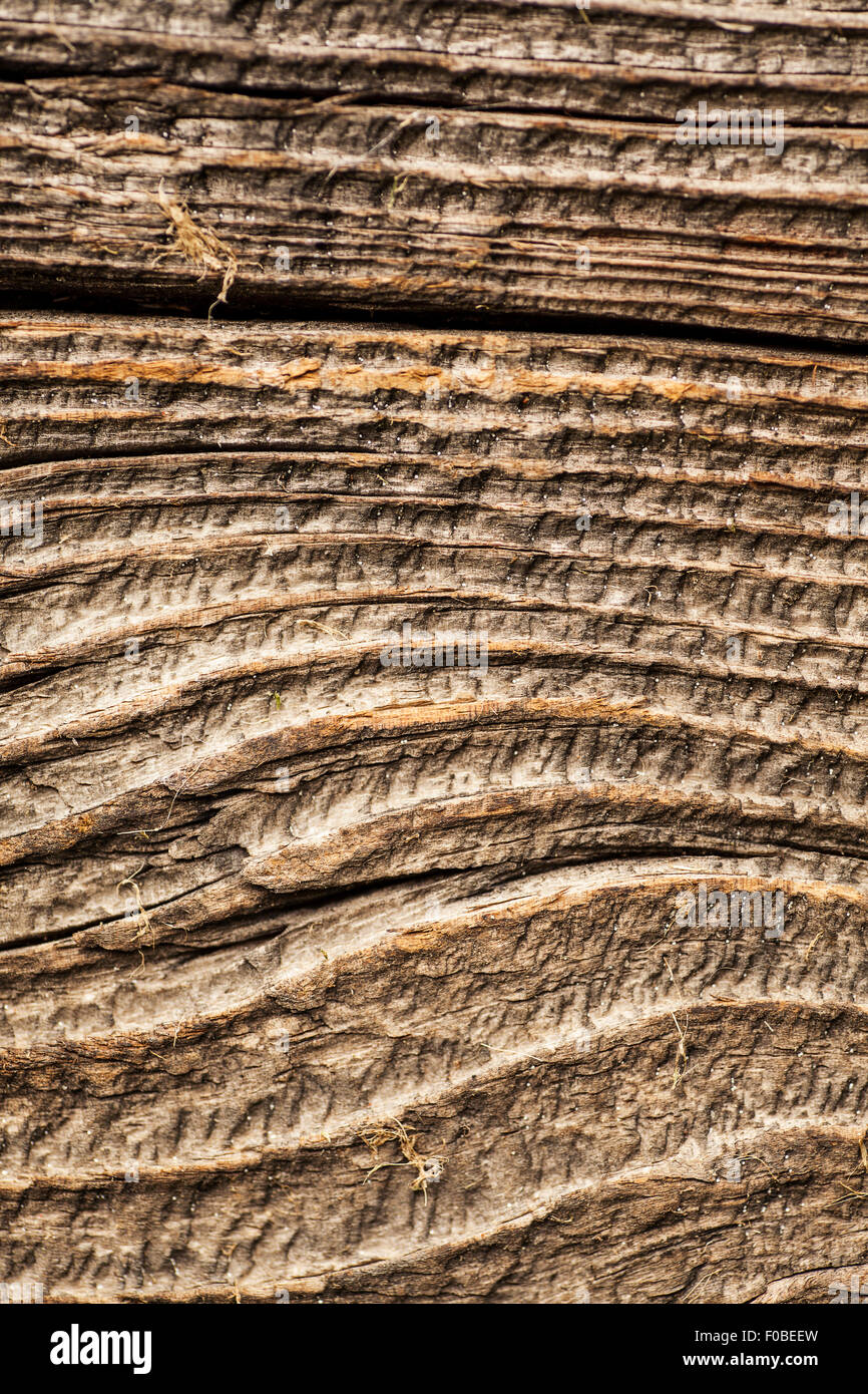 Wood Grain Texture deep wood grain texture on a piece of weathered wood stock photo